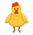 cartoon chicken or yellow chick vector image