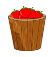 cartoon tomatoes basket bucket isolated on white vector image