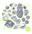 ink hand drawn fat burners fruits and veggies vector image