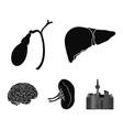 liver gallbladder kidney brain human organs vector image vector image