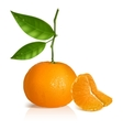 Fresh tangerine with green leaves and slices vector image vector image