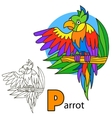 Parrot Coloring book page vector image vector image