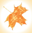 Watercolor autumn maple leaf vector image vector image