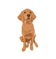 golden retriever cute puppy sitting vector image