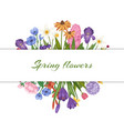 spring flowers floral card with garden flowers vector image