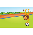 a lion and ball vector image vector image