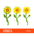 arnica flower set different styles vector image vector image