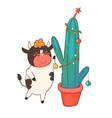 cartoon bull decorates a christmas cactus isolate vector image