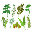 flat set of different herbs aromatic vector image
