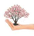 Hand holding a cherry tree blossom vector image