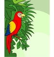 Macaw cartoon vector image vector image