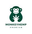 monkey cannabis hemp logo icon vector image