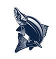 sockeye salmon logo isolated vector image