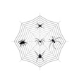 Spiders on a spider web vector image