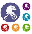 bear on a bike icons set vector image vector image