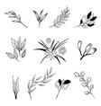 collection of hand drawn flowers and plants vector image