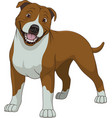 funny purebred staffordshire bull terrier vector image vector image