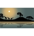 Giraffe in riverbank scenery vector image