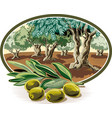 olives on a branch vector image vector image