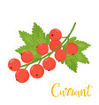 red cartoon currant isolated on white background vector image