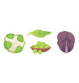set cabbage and lettuce vegetable green vector image vector image