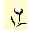 Common dandelion vector | Price: 1 Credit (USD $1)