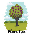 plum tree plum fruit vector image