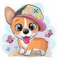 cartoon dog corgi in a cap vector image vector image