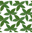 green leaves of holly plant background seamless vector image vector image