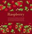 raspberries red background with summer fresh vector image