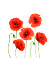 a red poppies isolated on white background 3d vector image