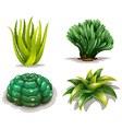 Aloe vera plants and cacti vector image vector image