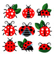 cute ladybug icons cartoon-style bugs and vector image