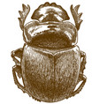 engraving antique sacred scarab vector image vector image