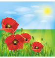 Nature background with flowers poppies vector image vector image