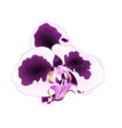 orchid with spots flower phalaenopsis tropical vector image vector image