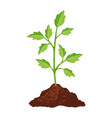 sprout fresh green small plant environment and vector image