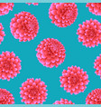 pink dahlia on blue background vector image vector image