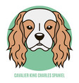 portrait of cavalier king charles spaniel vector image vector image