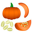 set of pumpkin seeds and slices isolated on white vector image
