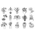 succulents set cactus peyote echeveria vector image