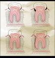 teeth desna Sepia vector image vector image