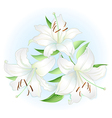 white lilly vector image