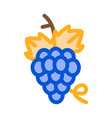 bunch grapes icon outline vector image vector image