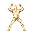 male human anatomy body builder flexing muscle vector image vector image
