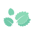 Mint Isolated leaves on white background vector image vector image