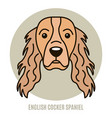 portrait english cocker spaniel vector image vector image