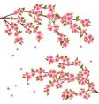 Sakura blossom Japanese cherry tree isolated vector image vector image