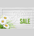 spring sale frame with chamomiles on wood vector image