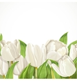 White tulips on white background vector image vector image